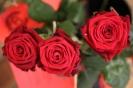 Rosen zum Ehejubiläum